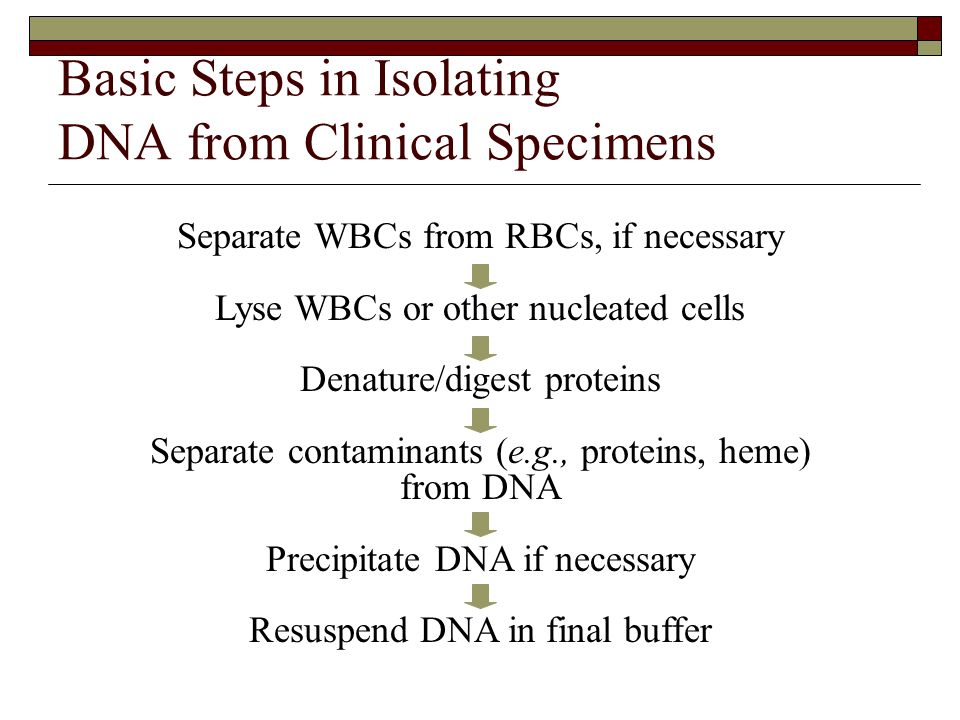 Basic Steps in Isolating DNA from Clinical Specimens