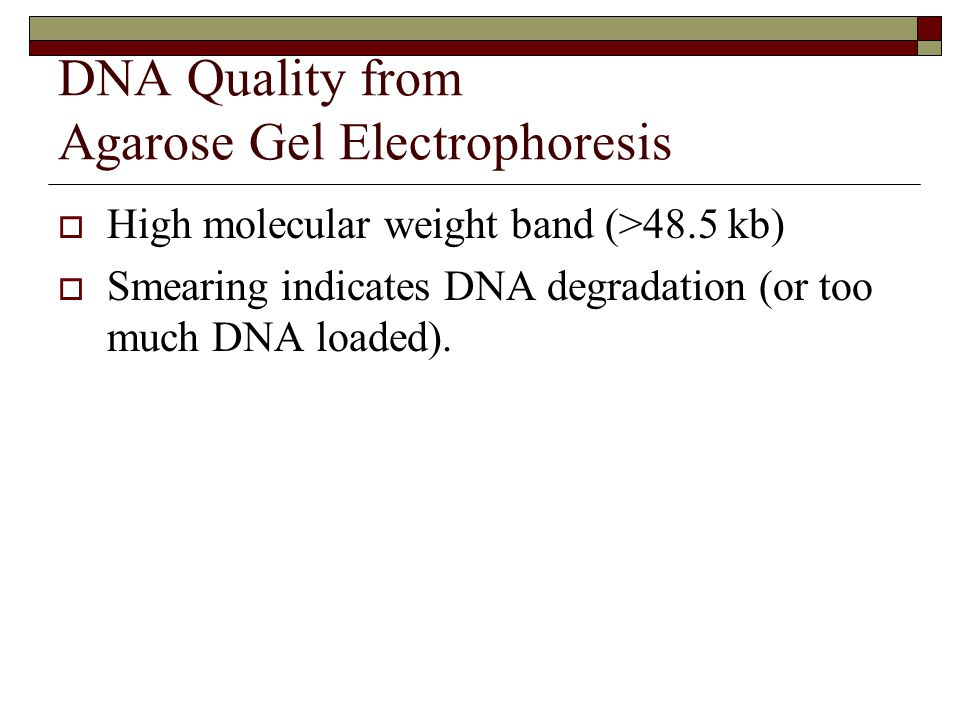 DNA Quality from Agarose Gel Electrophoresis