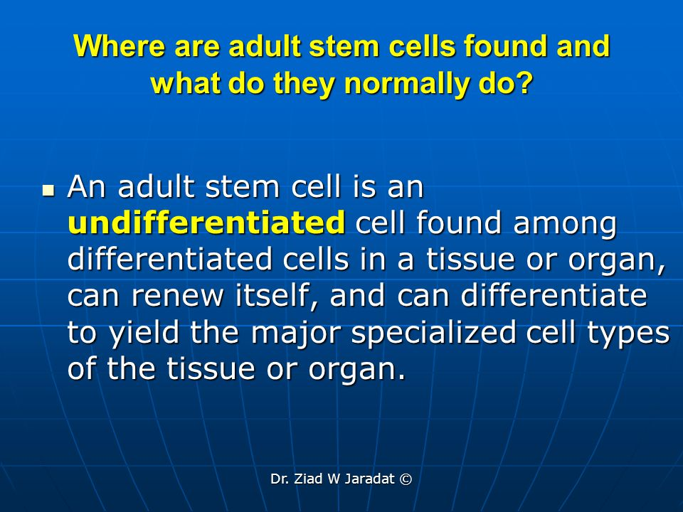 Where are adult stem cells found and what do they normally do