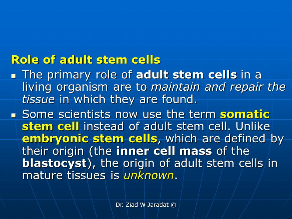 Role of adult stem cells