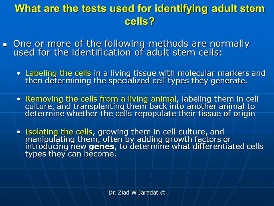 What are the tests used for identifying adult stem cells