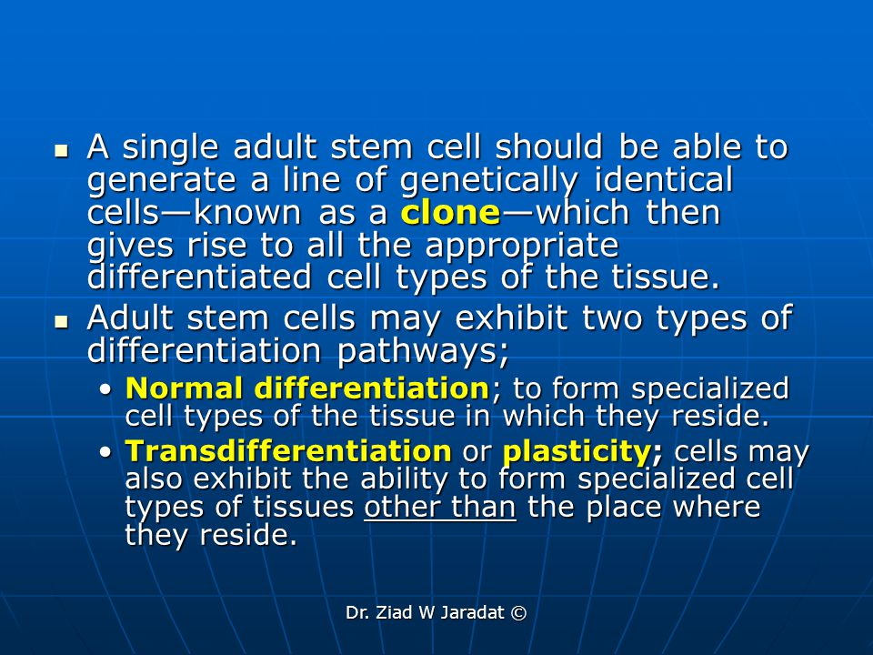 Adult stem cells may exhibit two types of differentiation pathways;