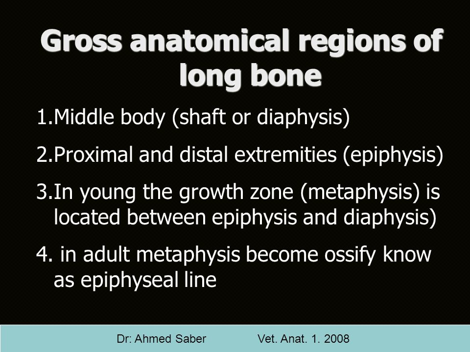 Gross anatomical regions of long bone