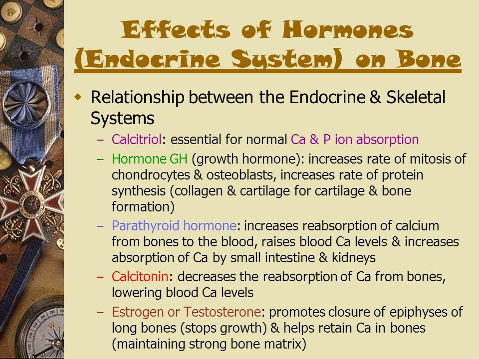 Effects of Hormones (Endocrine System) on Bone