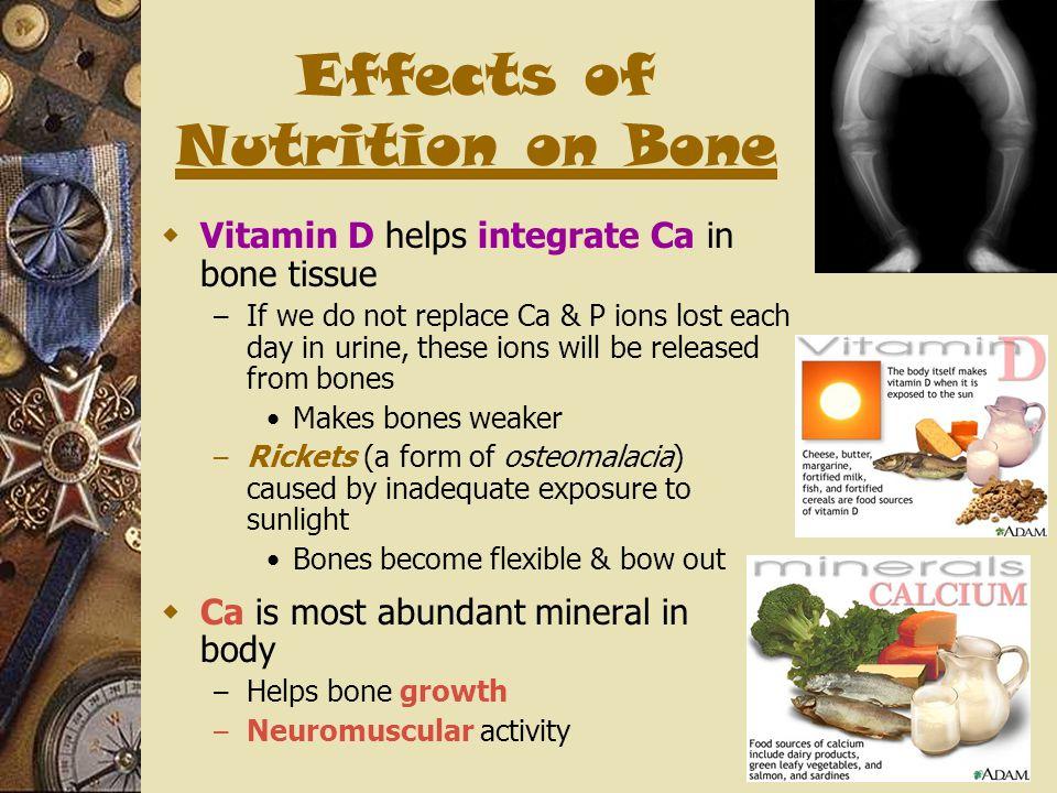 Effects of Nutrition on Bone