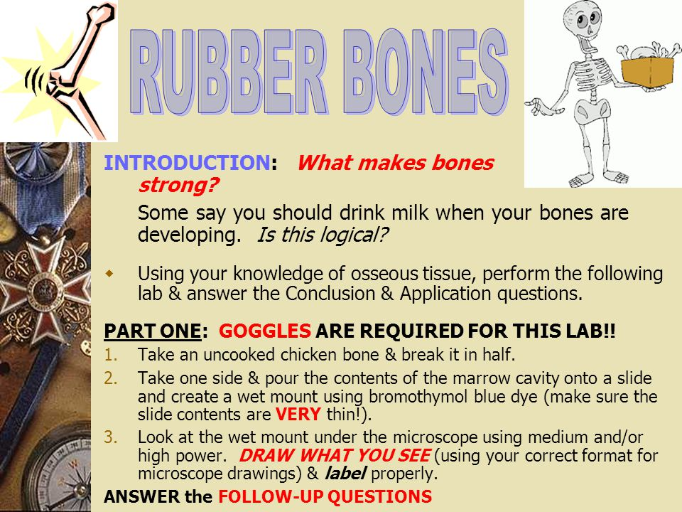 RUBBER BONES INTRODUCTION: What makes bones strong