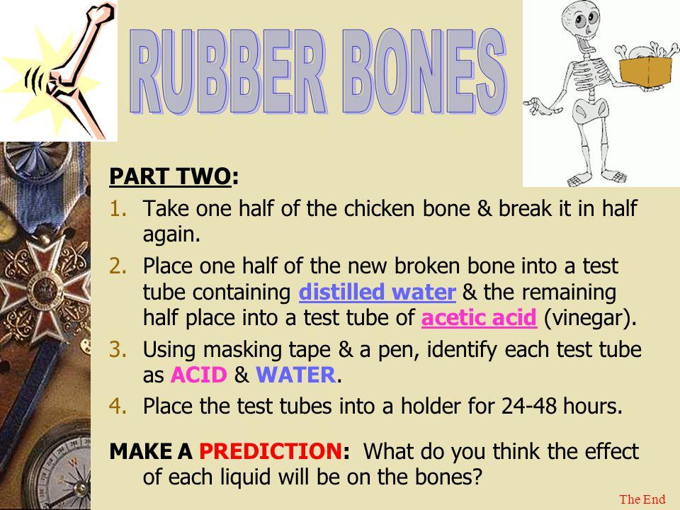 RUBBER BONES PART TWO: Take one half of the chicken bone & break it in half again.