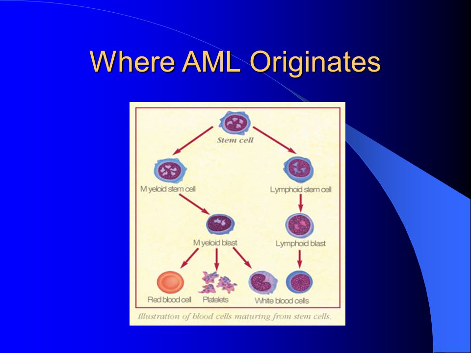 Where AML Originates