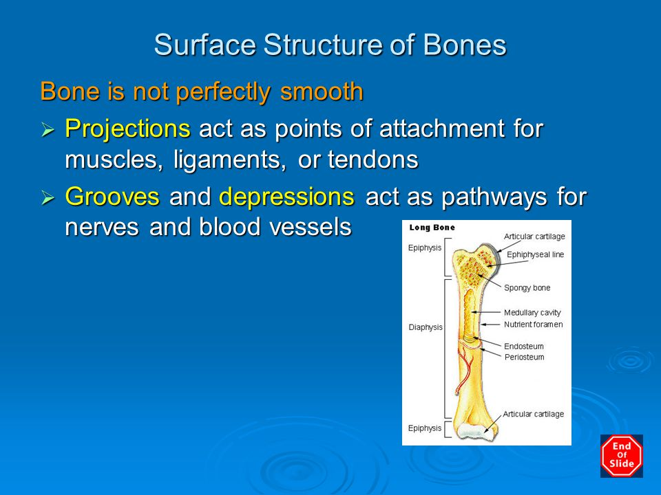 Surface Structure of Bones