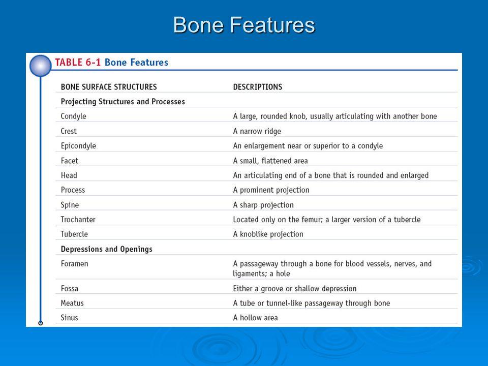 Bone Features