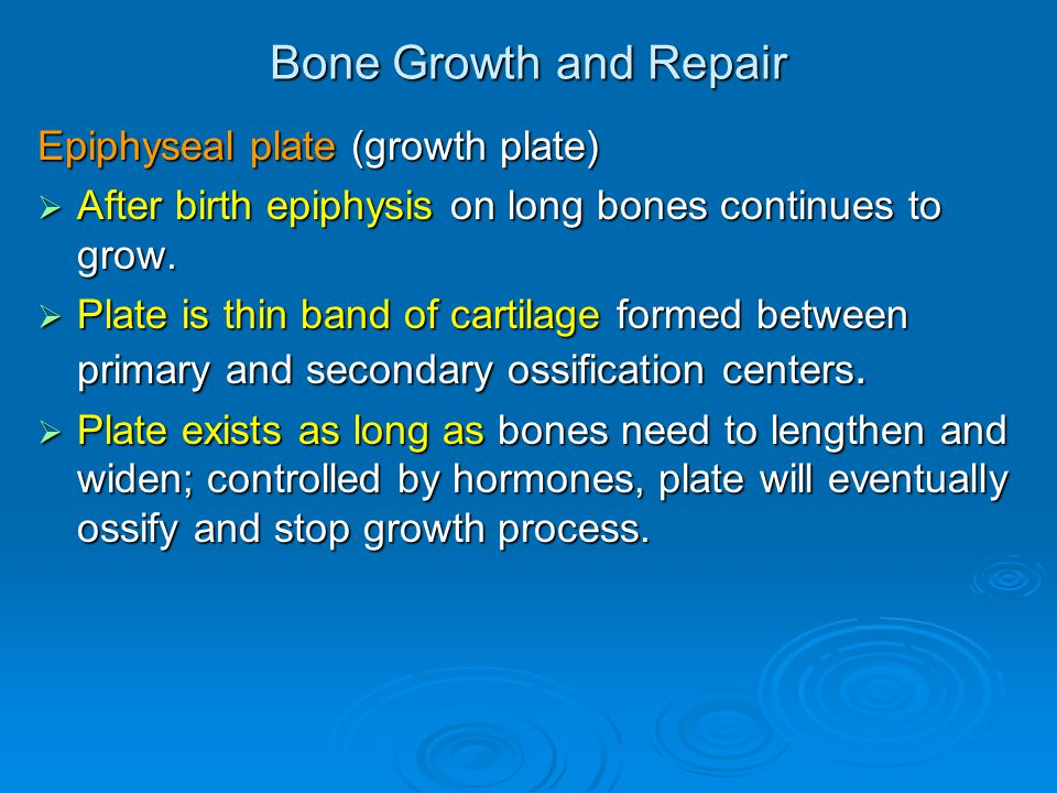 Bone Growth and Repair Epiphyseal plate (growth plate)