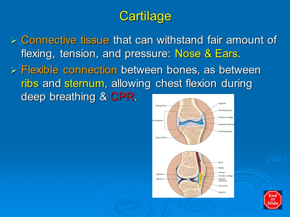 Cartilage Connective tissue that can withstand fair amount of flexing, tension, and pressure: Nose & Ears.