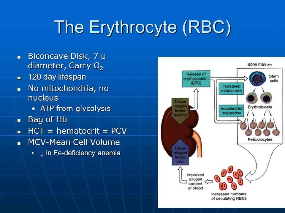 The Erythrocyte (RBC) Biconcave Disk, 7 μ diameter, Carry O2