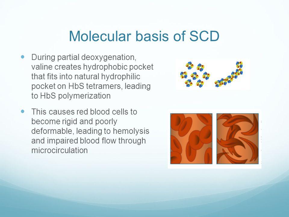 Molecular basis of SCD