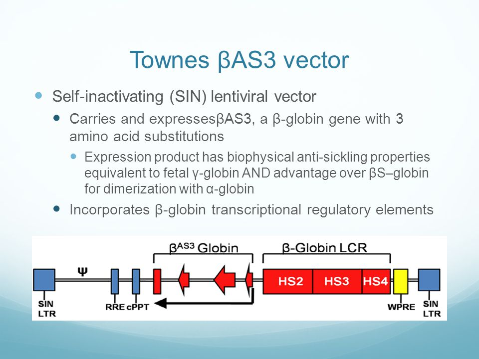 Townes βAS3 vector Self-inactivating (SIN) lentiviral vector