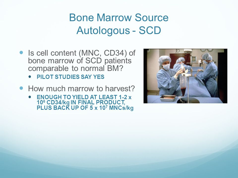 Bone Marrow Source Autologous - SCD
