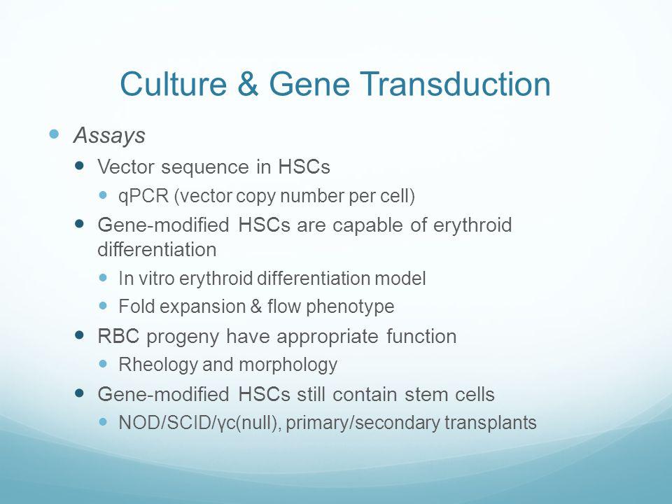 Culture & Gene Transduction