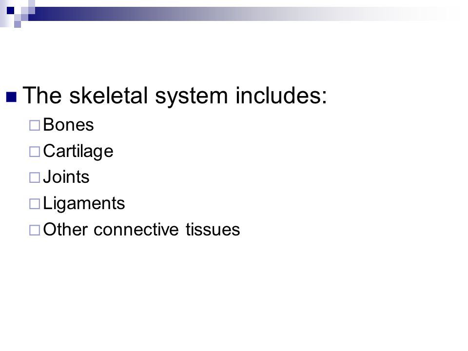 The skeletal system includes: