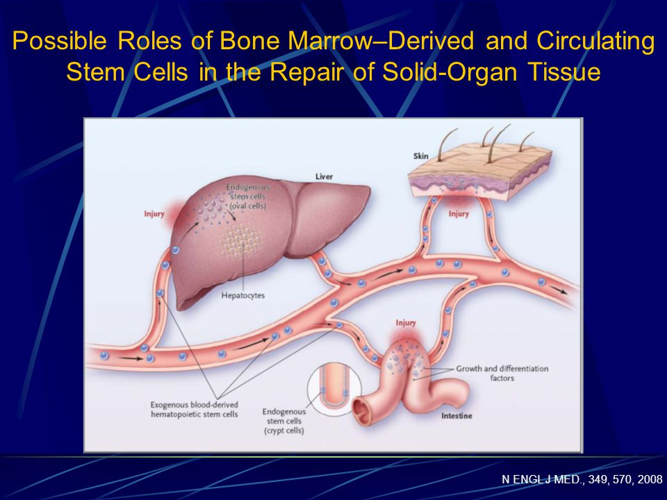 Possible Roles of Bone Marrow–Derived and Circulating Stem Cells in the Repair of Solid-Organ Tissue