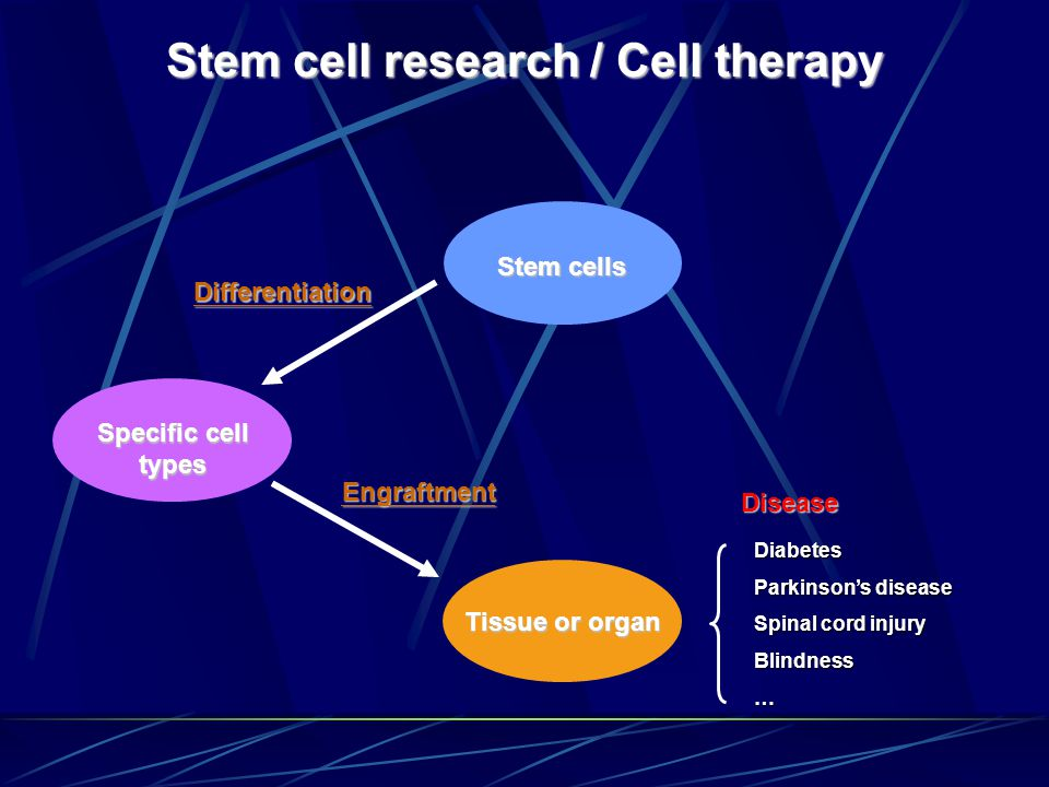 Stem cell research / Cell therapy