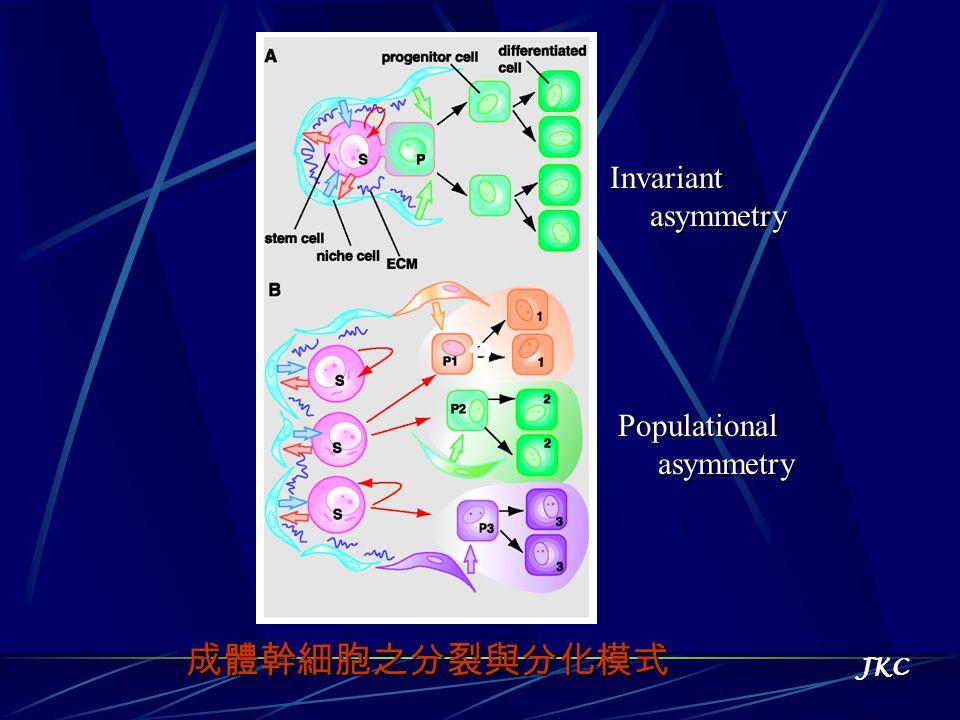 Invariant asymmetry ? Populational asymmetry 成體幹細胞之分裂與分化模式 JKC