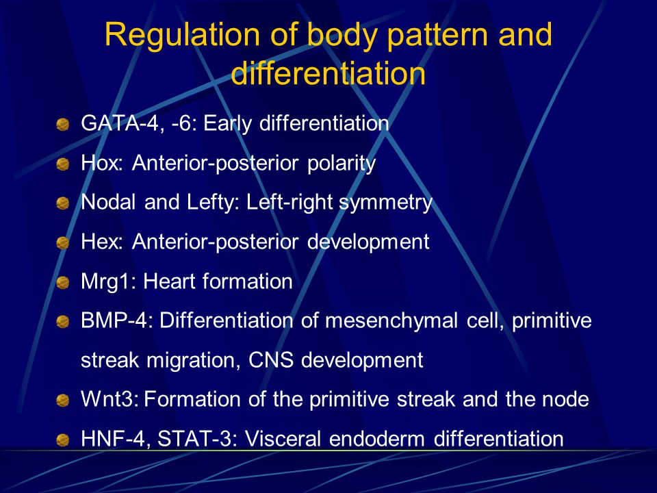 Regulation of body pattern and differentiation