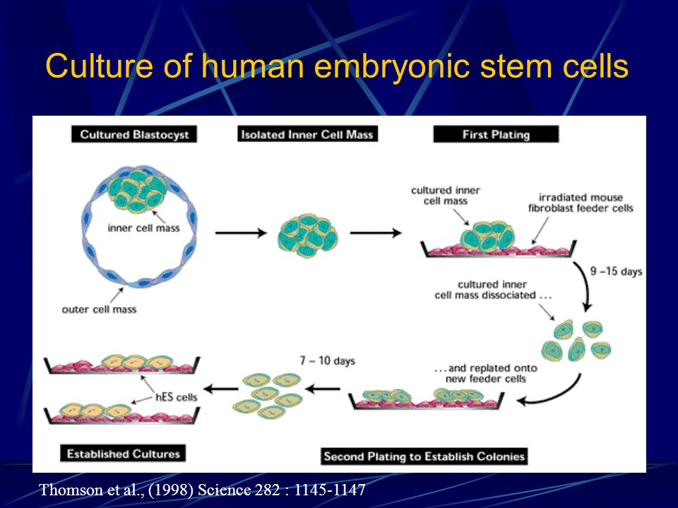 Culture of human embryonic stem cells