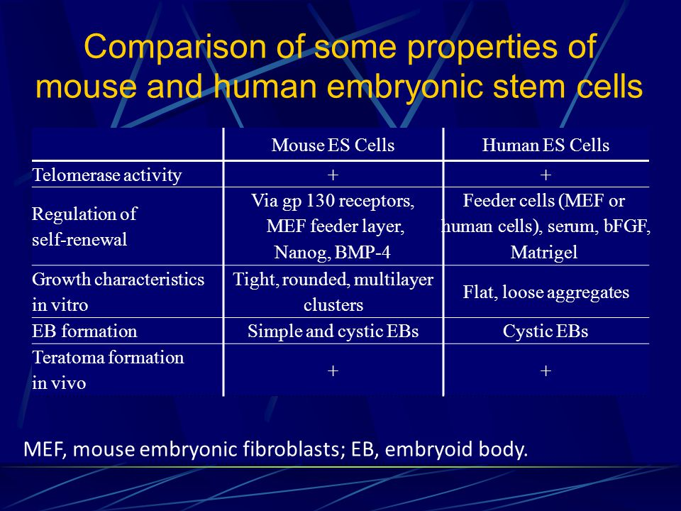 Comparison of some properties of mouse and human embryonic stem cells