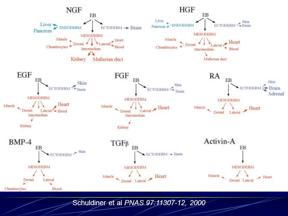 Schuldiner et al PNAS 97:11307-12, 2000