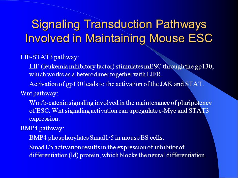 Signaling Transduction Pathways Involved in Maintaining Mouse ESC