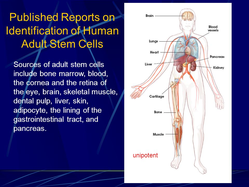 Published Reports on Identification of Human Adult Stem Cells