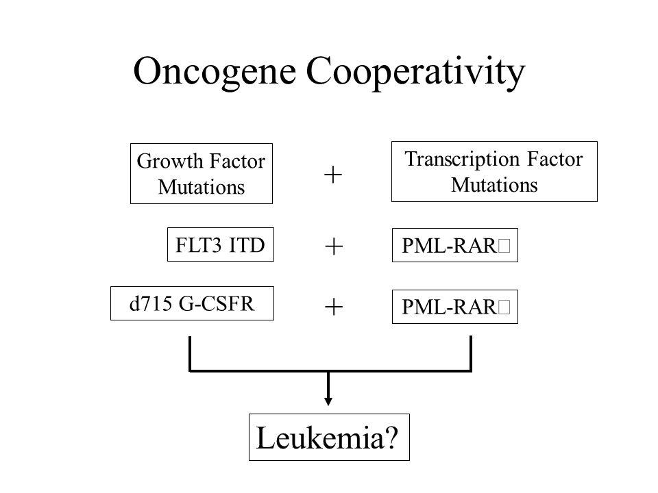 Oncogene Cooperativity
