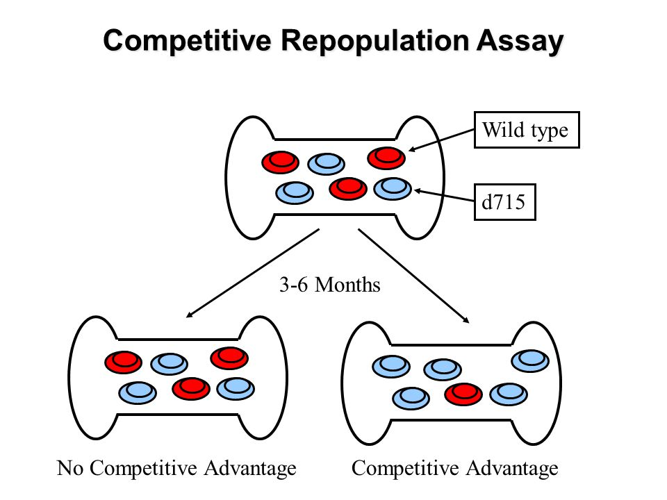 Competitive Repopulation Assay