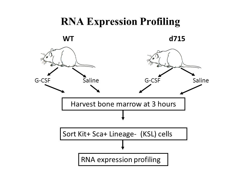 RNA Expression Profiling