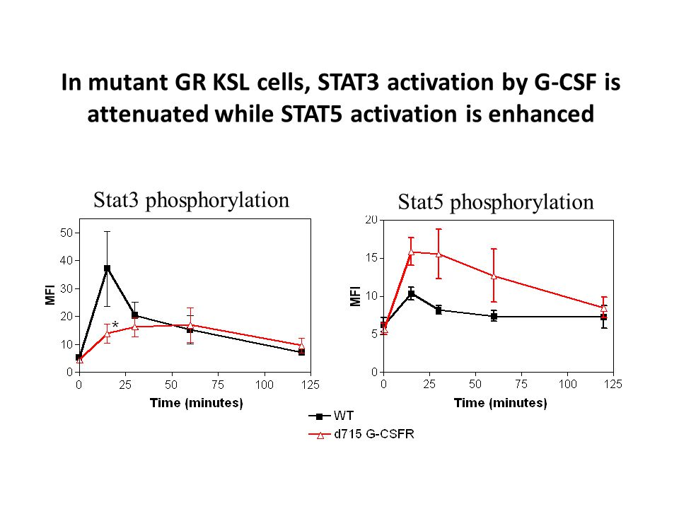 In mutant GR KSL cells, STAT3 activation by G-CSF is attenuated while STAT5 activation is enhanced