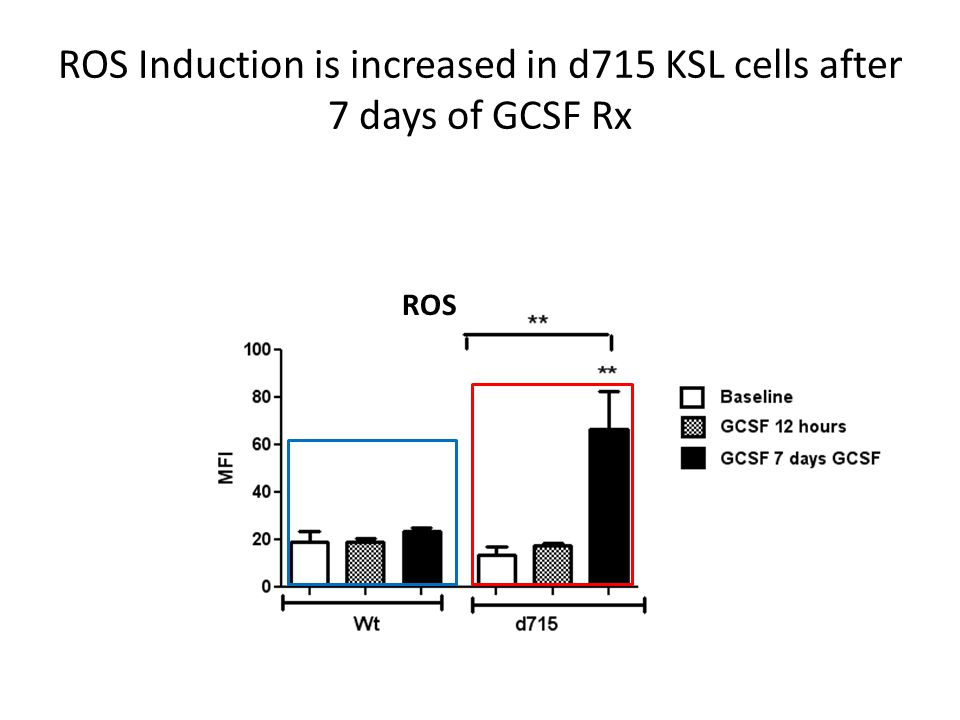 ROS Induction is increased in d715 KSL cells after 7 days of GCSF Rx