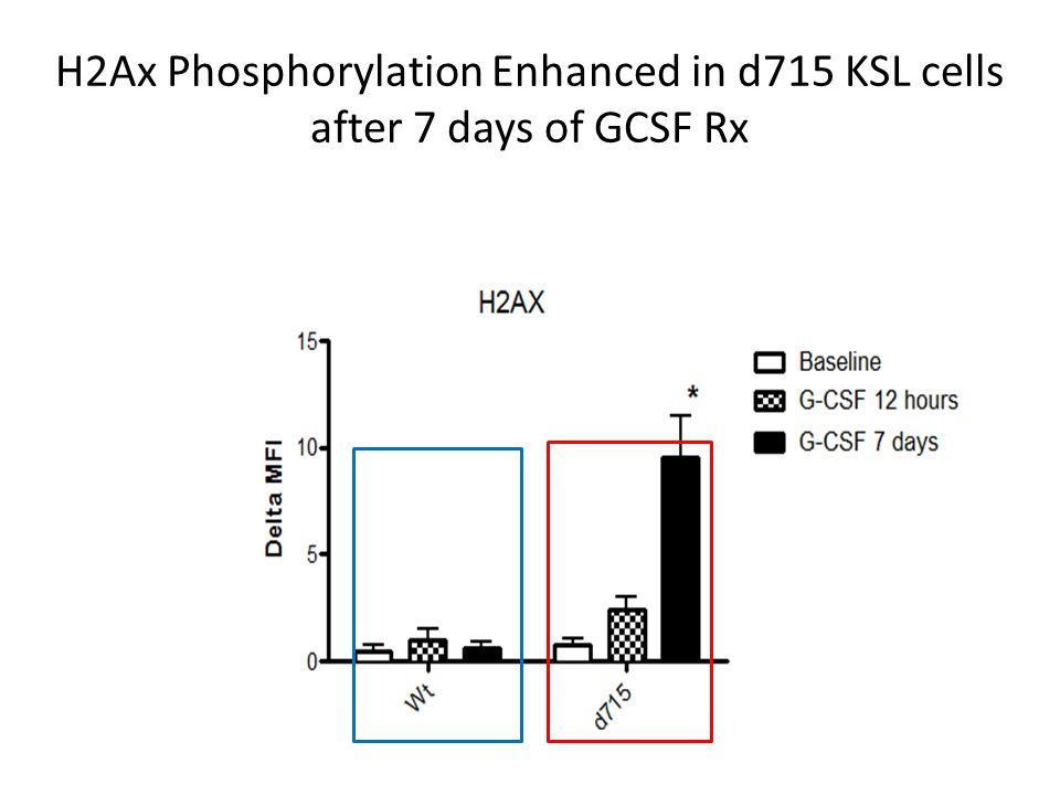 H2Ax Phosphorylation Enhanced in d715 KSL cells after 7 days of GCSF Rx