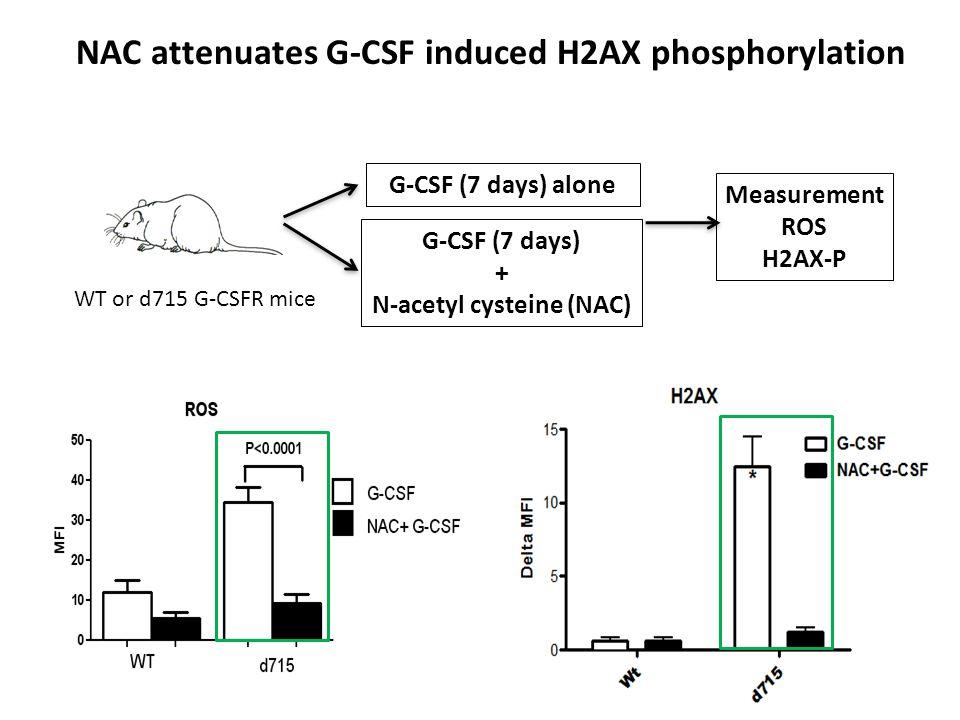 NAC attenuates G-CSF induced H2AX phosphorylation