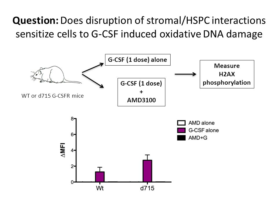 Question: Does disruption of stromal/HSPC interactions sensitize cells to G-CSF induced oxidative DNA damage