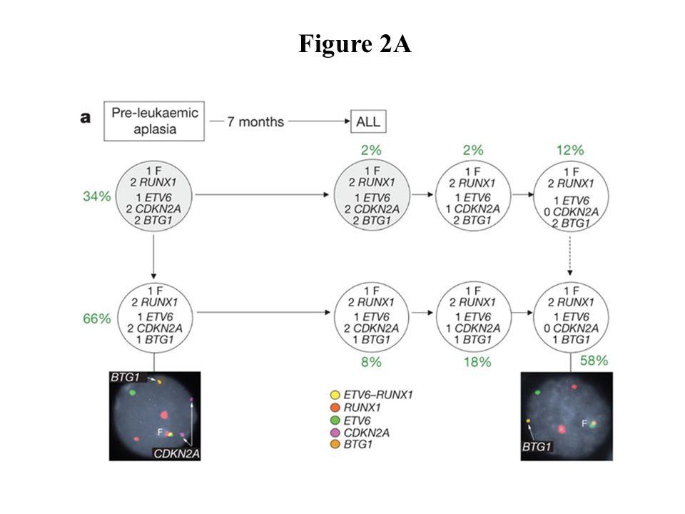 cdkn2a mechanisms of leukemogenesis in patients with scn daniel c link
