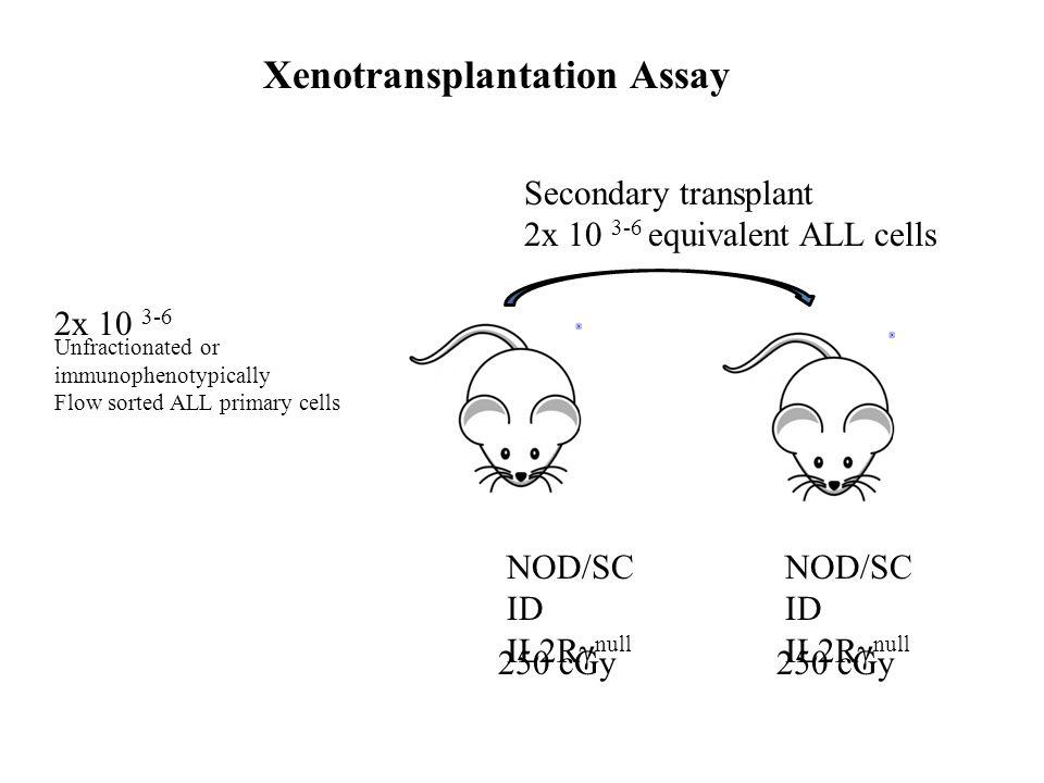 Xenotransplantation Assay