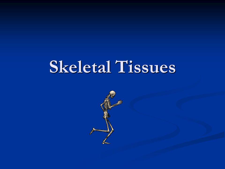 Skeletal Tissues