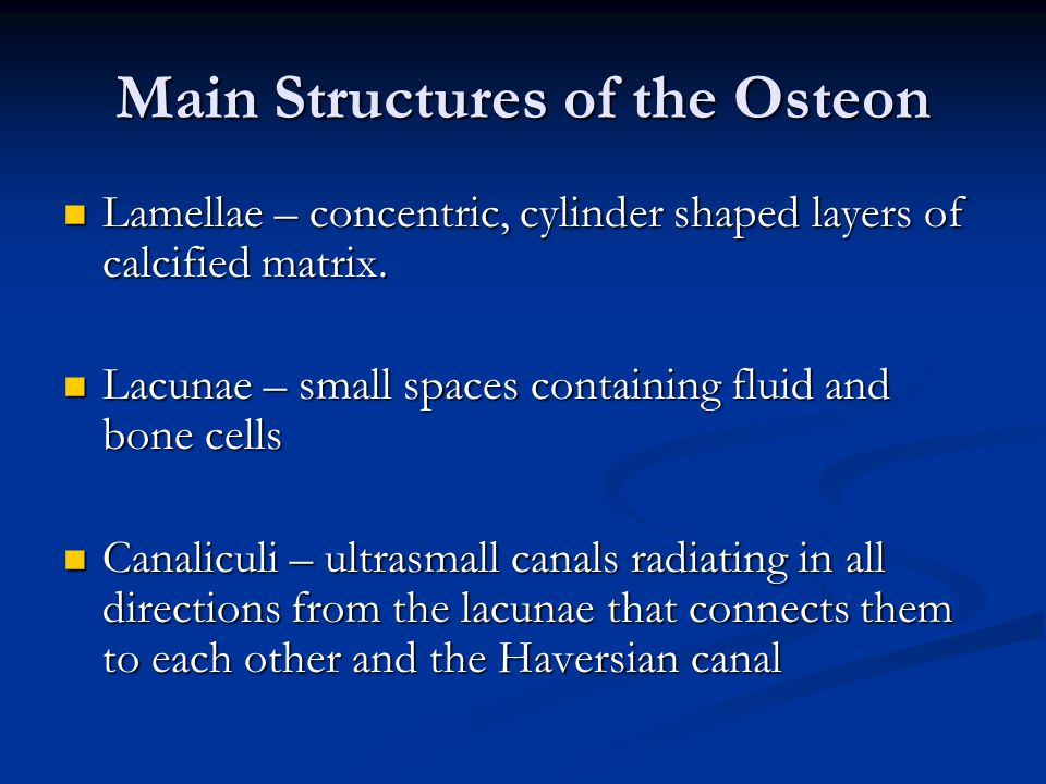 Main Structures of the Osteon
