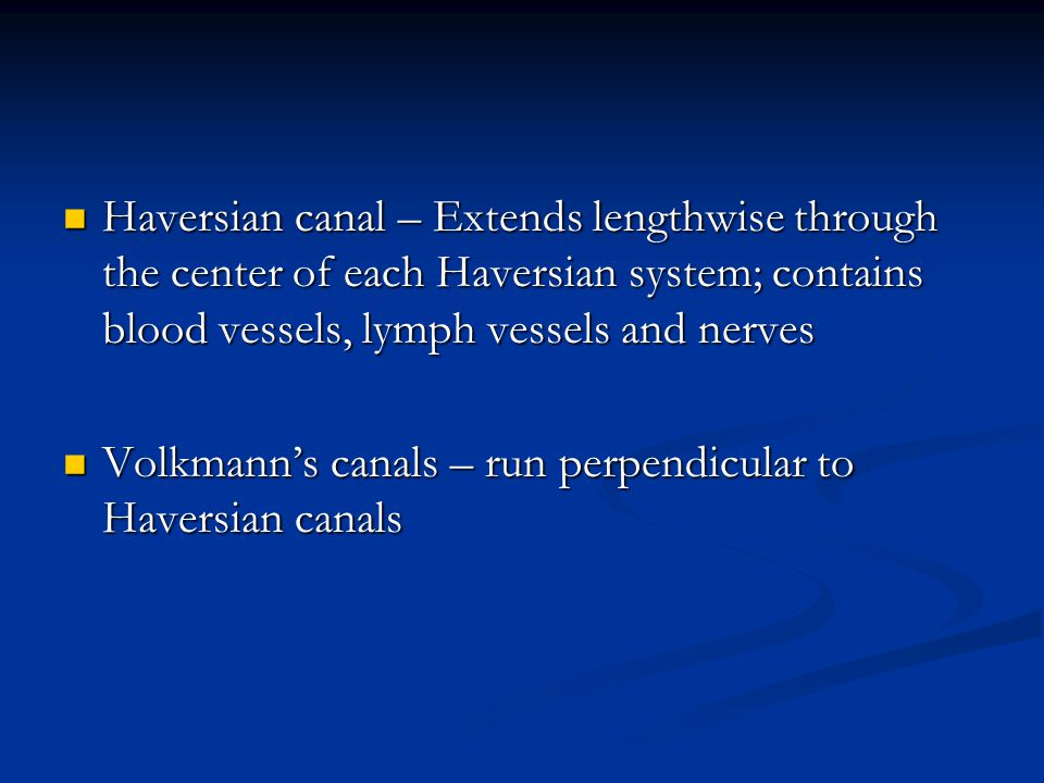 Haversian canal – Extends lengthwise through the center of each Haversian system; contains blood vessels, lymph vessels and nerves
