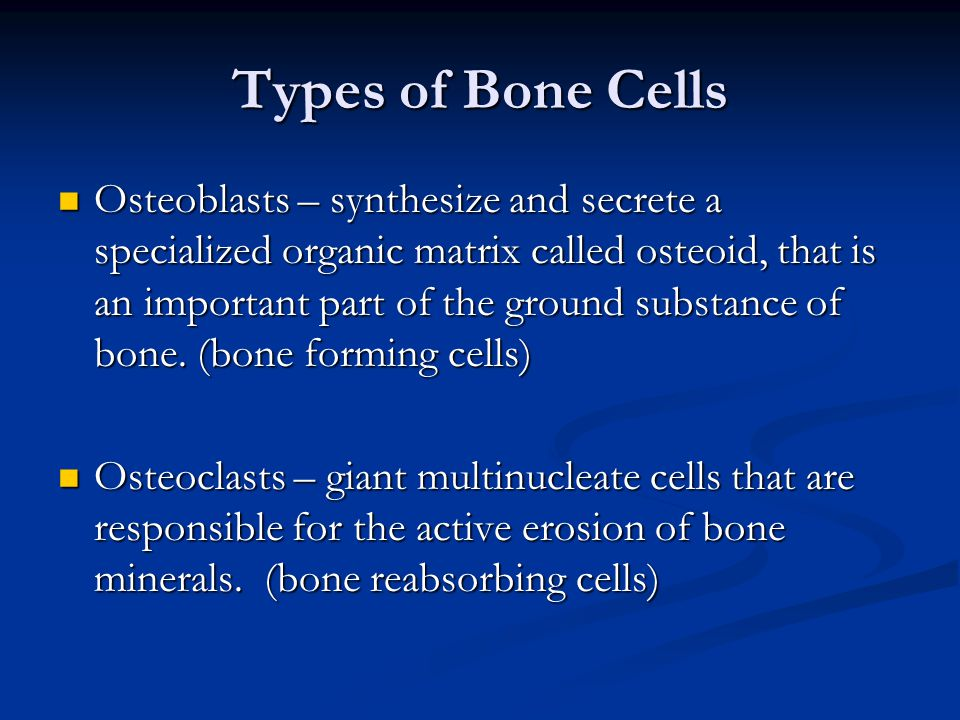 Types of Bone Cells