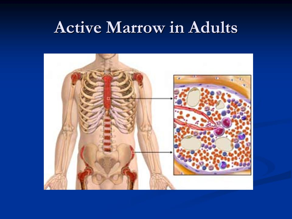 Active Marrow in Adults