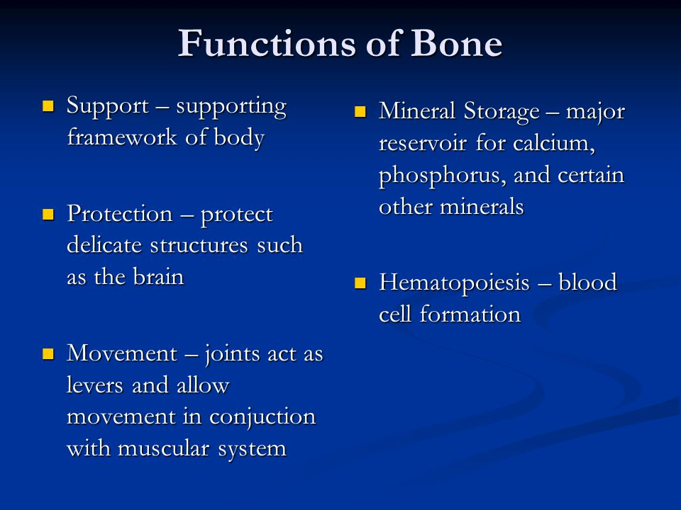 Functions of Bone Support – supporting framework of body