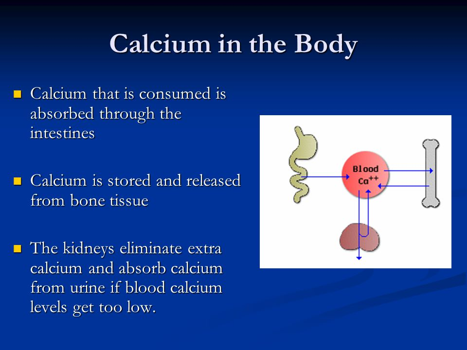 Calcium in the Body Calcium that is consumed is absorbed through the intestines. Calcium is stored and released from bone tissue.