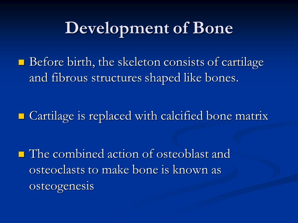 Development of Bone Before birth, the skeleton consists of cartilage and fibrous structures shaped like bones.