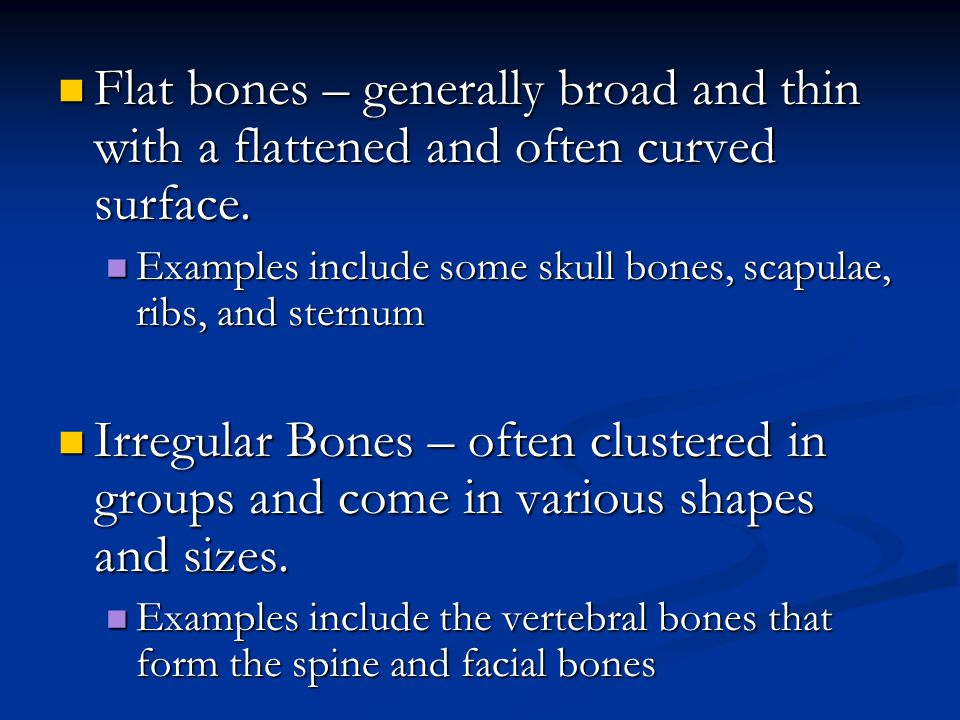 Flat bones – generally broad and thin with a flattened and often curved surface.